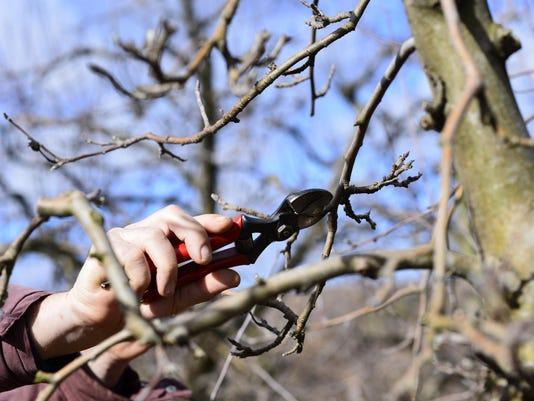 pruningnew
