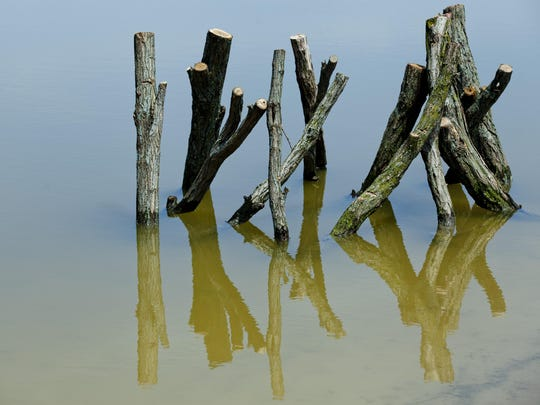 A wood formation is seen in a pond as part of restoration work Wednesday, June 17, 2015 at the County Wetlands Park on the Blue Water River Walk in Port Huron.