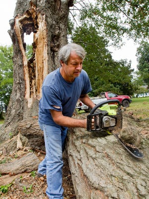 Greg Kelly cuts a knot off the oak tree that is known as Helen's favorite tree at Ivy Green as workers cut the tree down in Tuscumbia, Ala., Sept. 21, 2015. The tree which has suffered damage over the years had a large branch be ripped off by the violent storms that passed through Tuscumbia recently and internal rotting necessitating its being cut down. It is said that Annie Sullivan, teacher and mentor to Helen Keller, once got Helen out of this tree before a storm. Kelly is cutting up parts of the tree for firewood. (Matt McKean/Times Daily via AP)