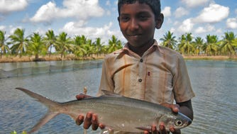 A boy in India holding a milkfish, which has been grown in fish ponds in Asia for centuries.