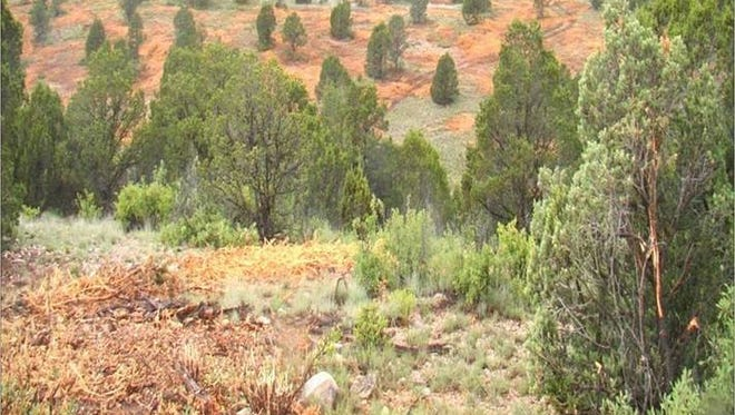 Results of Brush Management efforts as part of the North Central New Mexico Watershed Restoration Project.