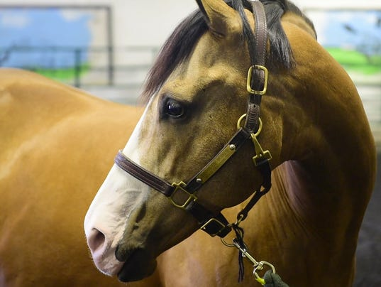 horse therapy essay Based on these problems, anestis' team recommended that that equine therapy be put on hold until well-designed studies demonstrate its effectiveness.