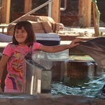 This mom's view: Pros, cons of taking your kids to Dolphinaris Arizona