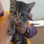 """On Monday, you can """"Name your Price"""" when it comes to the fee for adopting cats at the Dutchess County SPCA in Hyde Park."""