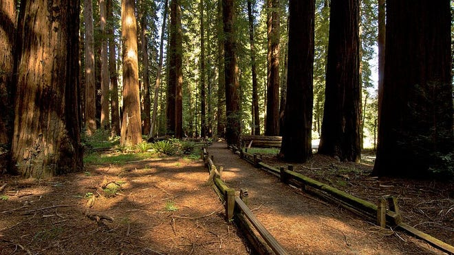 Richardson Grove State Park is one of the 116 parks offering a free day pass to visitors on Black Friday.