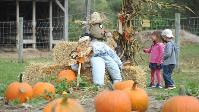 Charlotte Grew, 3, of Yarmouthport, left, and Henry Nobre, 3, of South Yarmouth, get a closer look at the scarecrow at the pumpkin patch at Taylor-Bray Farm Sunday morning.  Taylor-Bray Farm hosted a pumpkin sale over the weekend.