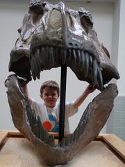 A kid stands behind a life-size T-Rex skull.