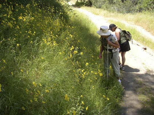 Leila Parkinson, left and Susan Simon, right, check out the wildflowers on the Salt Creek Bureau of Land Management trail out of Three Rivers.