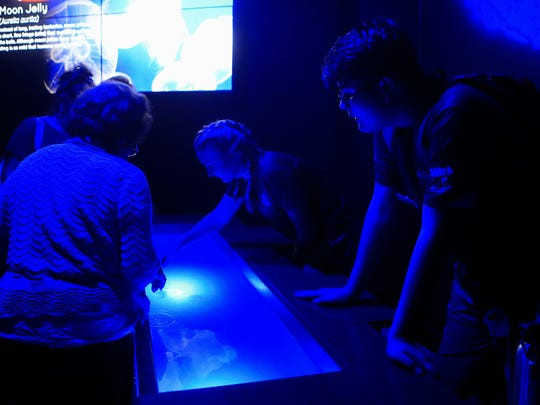 AquaTeen Noah Johnson (right) watches guests interact with the jelly fish in a touch pool \Friday, Aug. 28, 2017, at the Texas State Aquarium in Corpus Christi.