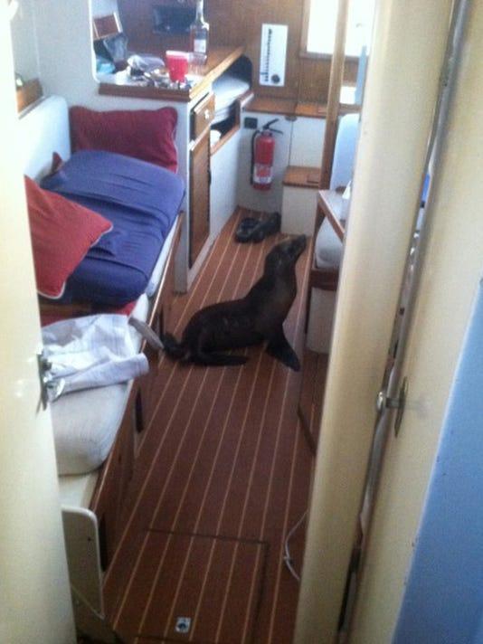 Sea Lion Bunkmate