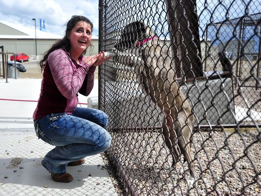 Sage Sundstrom visits Airy, a 1-year-old Akita mix,