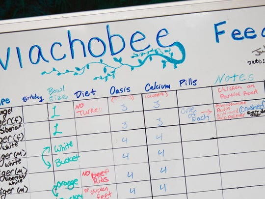 A feeding chart is used to track and document the various schedules for feeding the large cats at the Kowiachobee Animal Preserve in Golden Gate Estates on July 8. The nonprofit preserve is home to over 100 animals and serves as a learning facility to educate visitors about animal conservation.