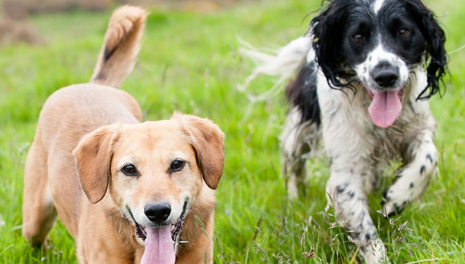 Webster will hold its first dog census in about 20 years.