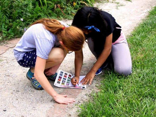 Volunteers participate in Keep Indianapolis Beautiful, Inc.'s 2017 Pollinator Count to tally the birds, bees and butterflies around the city. Organizers say they couldn't do this project without the help of citizen scientists.