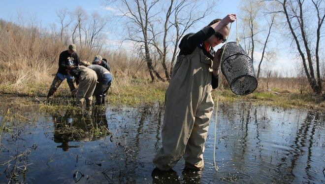 Franklin High School Ecology Club members monitors the  wetlands at Rainbow Airport Prairie along Root River in Franklin  in the spring of 2015.