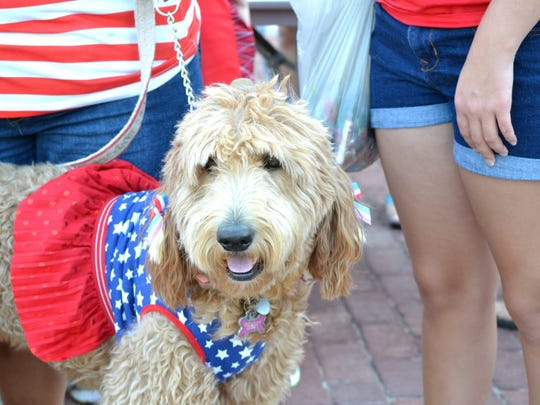 In this file photo, furry patriots took part in the annual Kell House Fourth of July parade and festivities. Mabel McGillis joined her military family in the fun.