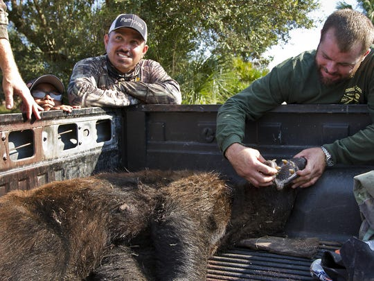 Larry Dupree, of Labelle, inspects the mouth of the 200 lbs female black bear he hunted in Immokalee Saturday morning during the first day of bear hunting season. Hunting partner Josh Cantu and son Jose, 11, were all part of the hunting team.
