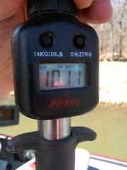 A digital scale records the fish's weight - 10.11 pounds.
