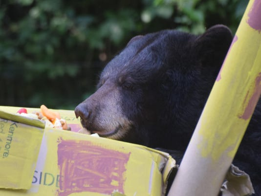 ANI Zoo Feeding Frenzy A black bears sniffs its food before eating during the Alexandria Zoo's FOTAZ Feeding Frenzy held Saturday, July 11, 2015. The organization, Friends Of The Alexandria Zoo, held a special morning event for its members where they were