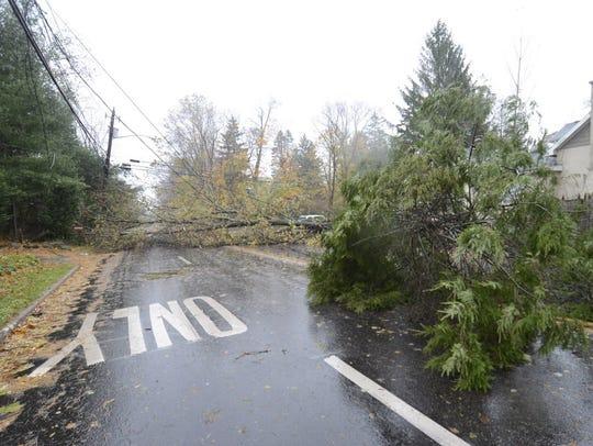 Fallen trees block Schraalenburg road (near Old Hook)
