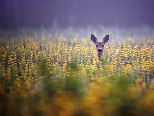 Deer-Wildlife