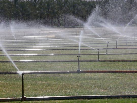 A field of turf is irrigated near Avenue 50 and Tyler Street in the eastern Coachella Valley.