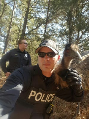 Officer Cody Pruitt poses with an emu he wrangled in Oxford on Friday as Officer Ryan Baker watches his back.