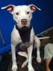 Nilla, a white pit bull, also died in the fire.