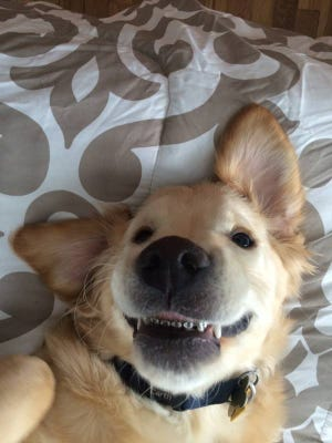 Wesley, the 6-month-old Golden Retriever, needed braces for medical reasons