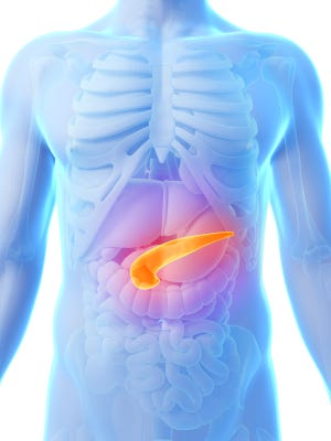 A rendered illustration highlights the pancreas.
