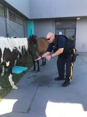 Det. Sgt. Fidiberto Soto Jr. of the New Jersey State Police gave water to some horses during his time in Puerto Rico.