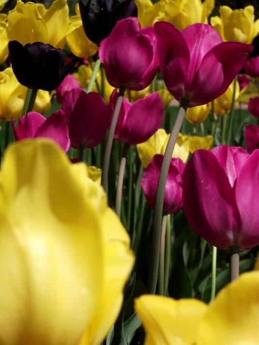 APC 2014 spring summer gardening guide may.jpg