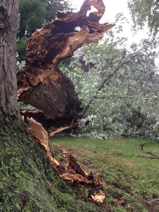 downed-trees-roseann-mckean-900.jpg