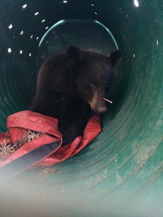 bearwitharrow.jpg
