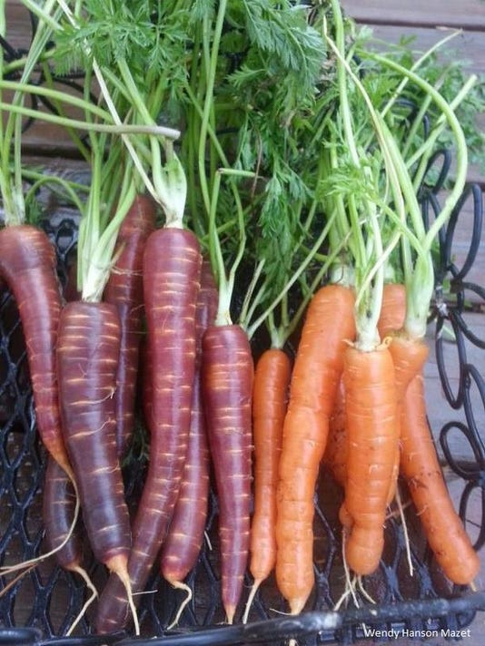 Carrots by Wendy Hanson Mazet.jpg