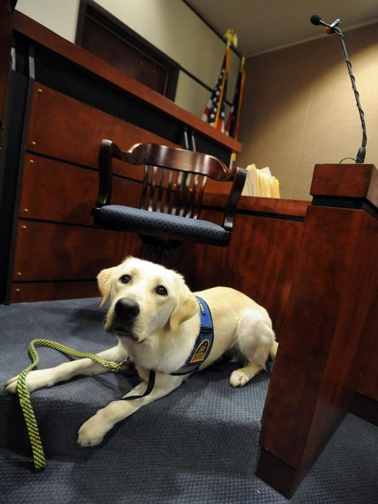 Courtroom Dogs (2)