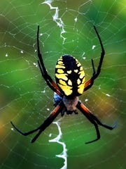 """Argiope spider photographed at The Ridges Sanctuary in Baileys Harbor by Douglas Sherman, part of his newly published photography book """"The Ridges Sanctuary: An Intimate View."""""""