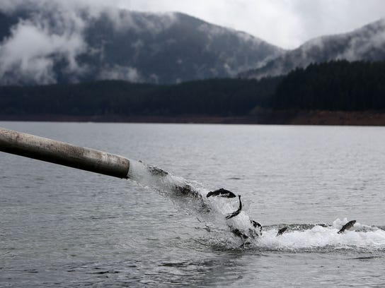 May 15 17 detroit lake fishing derby alive and well for Oregon fishing license fees