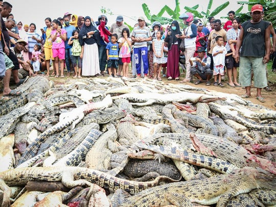Local residents stand near the carcasses of hundreds