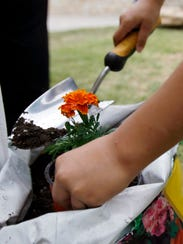 An attendee shovels soil into a freshly planted marigold