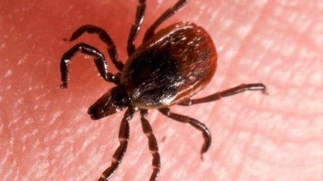 Ticks love to collect in wet leaves, so make sure to clear away any piles in your yard.