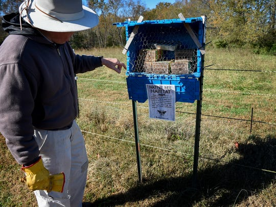 Volunteer Phillip Francis checks on the solitary bee