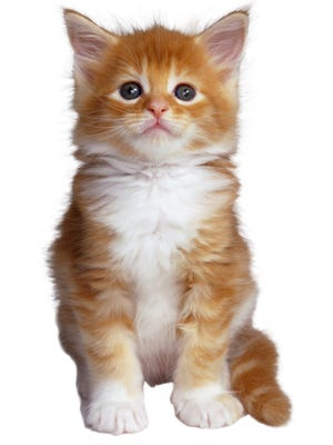 The Troy Police Department is doing a Twitter campaign to find a new mascot:a #policecat.