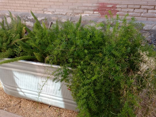 Horse troughs can make attractive raised planters in