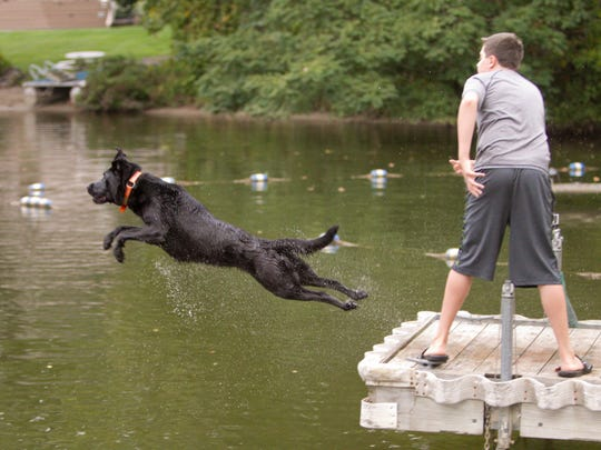 Trigger, the family dog, loves to jump so Nathan Elsey decided to put the dog's talent to the test. With Nathan's throwing arm and Trigger's long jumps and fast swimming, they're on their way to national competition.