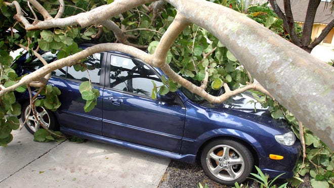 A Mazda Protege rests under a sea grape tree in 2005 following Hurricane Katrina.