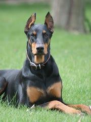 Their dog named G helped alert Paul and Kristin Sadler to an intruder.