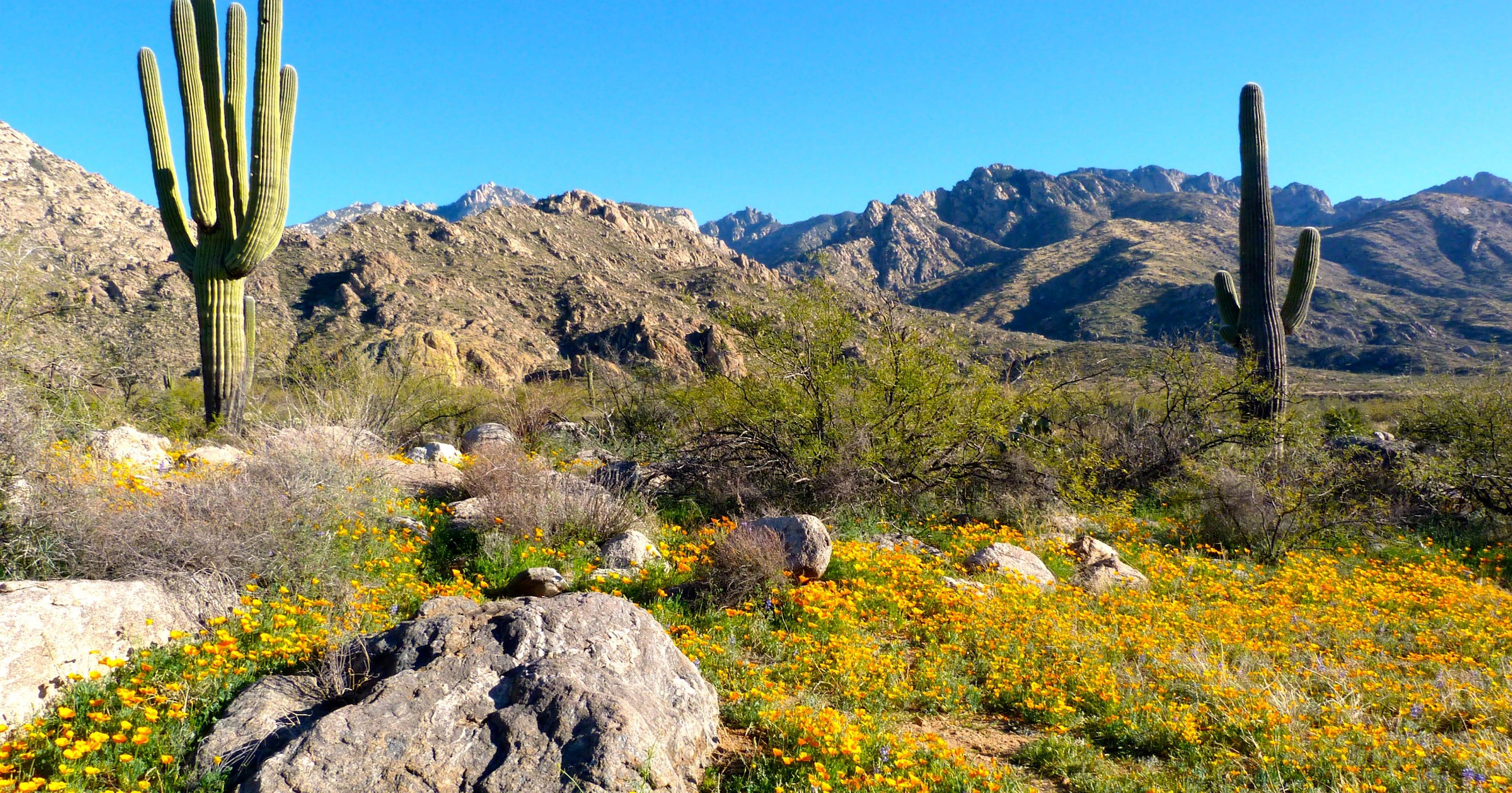 Best Places To See Arizonas Wildflowers
