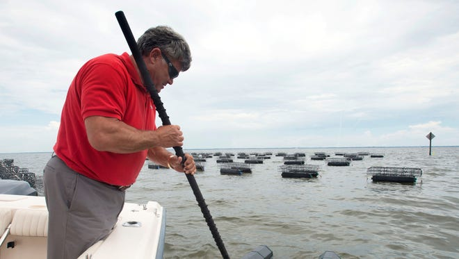 Pensacola resident Donnie McMahon, III checks on the health of an oyster colony he is farming in Escambia Bay. McMahon has started a business growing the bivalve mollusks at a multi-acre lease site in within sight of Scenic Hwy.