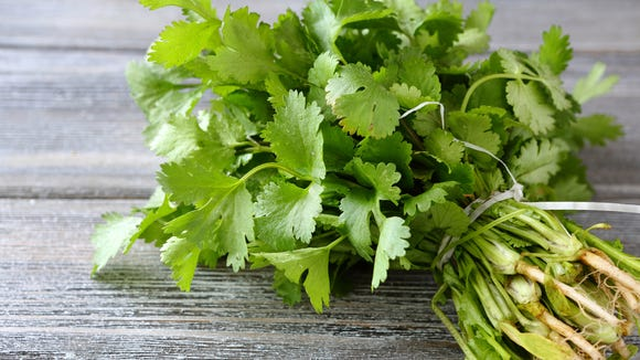 What's the difference between cilantro and corriander?